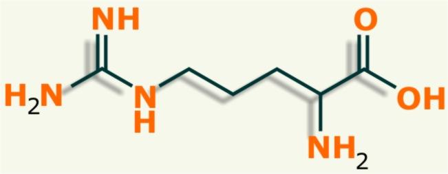 aminoacidos no esenciales como la arginina